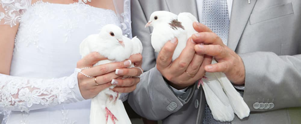 Wedding Party White Dove Release