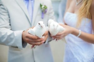 Closeup of Doves in hands of Bride and Groom for Outdoor Wedding Dove Release
