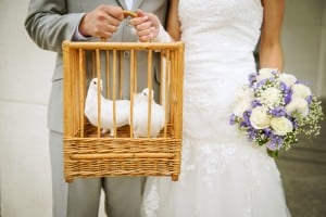 Picture of two wedding doves on display for Waukesha Dove Release, Waukesha, Wisconsin
