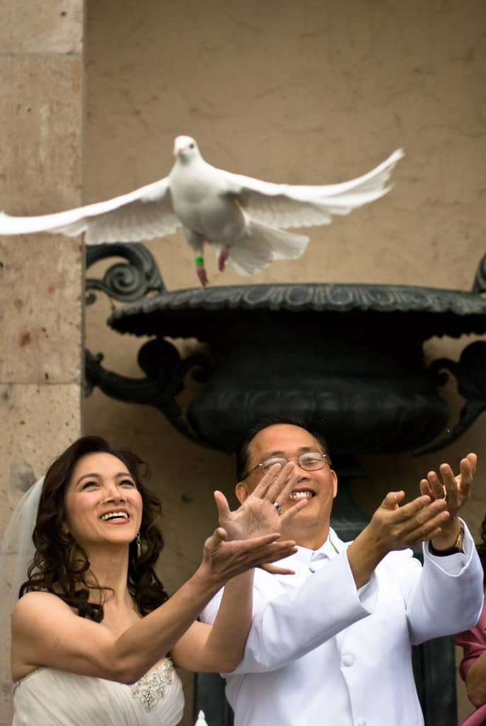 White Doves are symbols of peace, union and celebration around the world.
