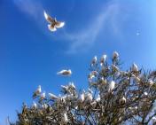 Wedding Doves, Wedding Dove Releases