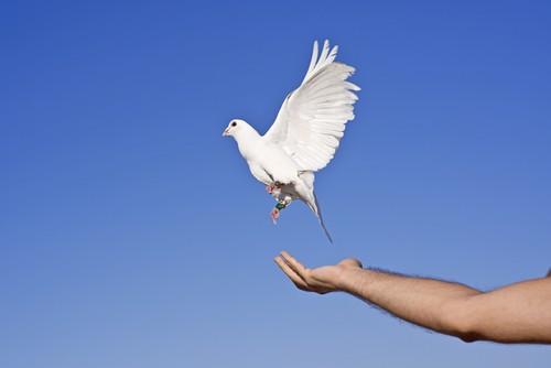 Dove Celebrations